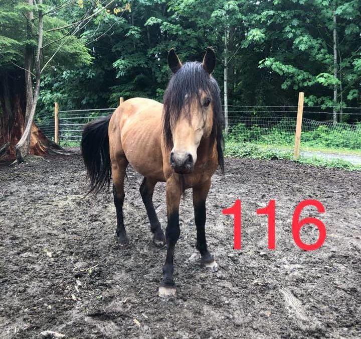 116 (Hector)